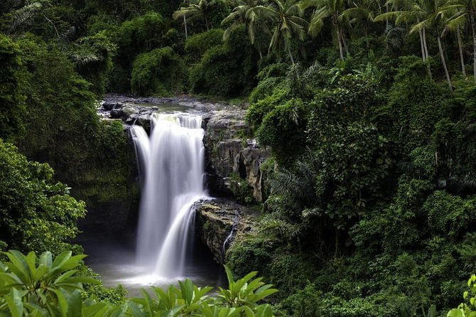 Bali Swing and Ubud Tour Including Lunch