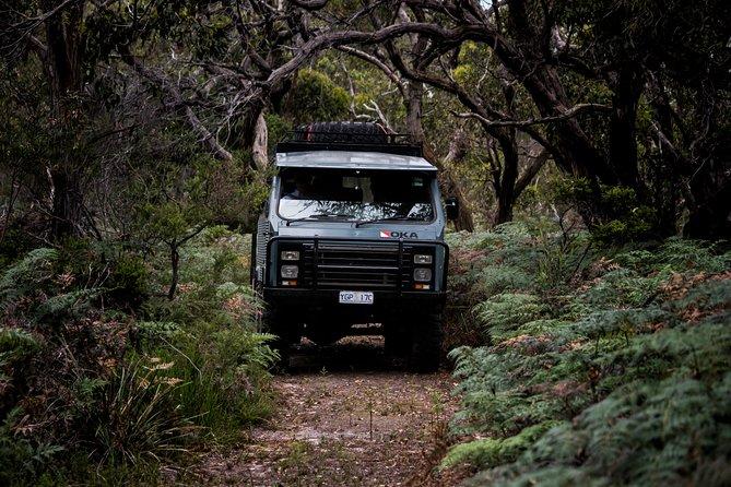 - Isla Phillip, AUSTRALIA