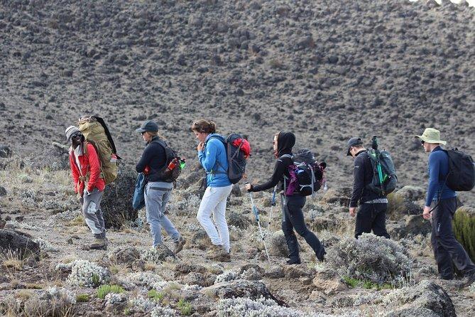 Kilimanjaro Lemosho Route 7 Days