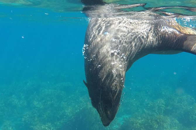 Island Snorkeling and Wildlife Boat Cruise photo 9