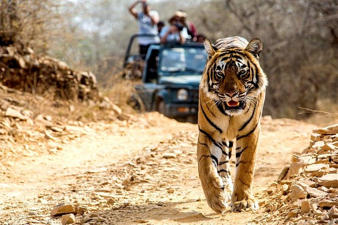 6 Days Golden Triangle with Ranthambore, Ajmer & Pushkar Tour