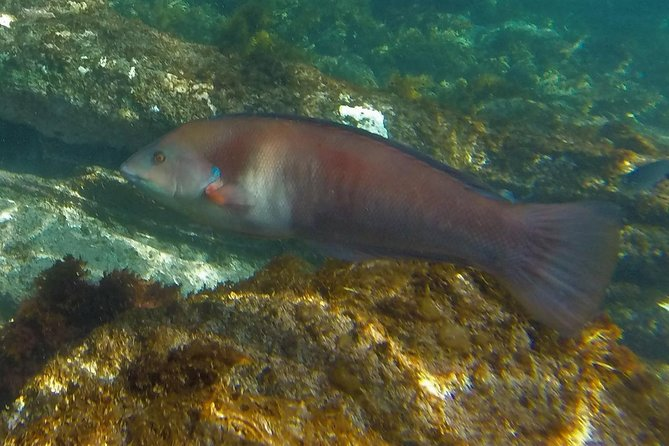 Island Snorkeling and Wildlife Boat Cruise photo 7