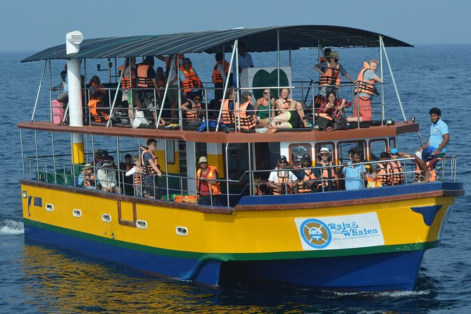 Whale & Dolphin Watching Boat Tour with Breakfast & Pick up from Mirissa