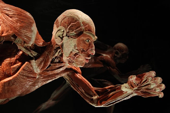 BODY WORLDS at Menschen Museum Berlin