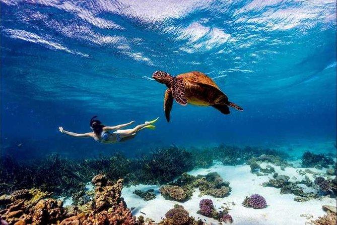 4 Days Diani Beach Safari