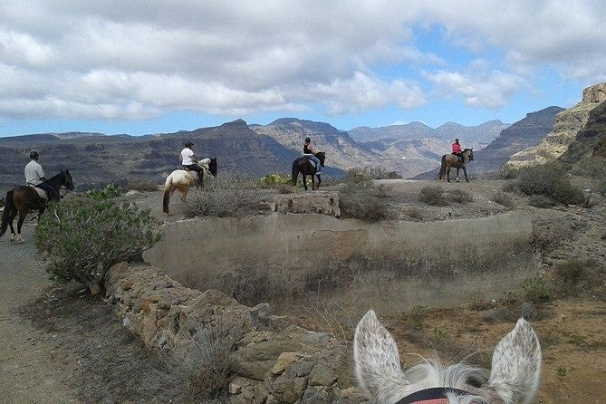 The Best Horse Riding Experience in Gran Canaria (2 hours) photo 7