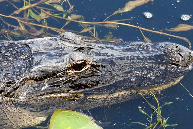 1 Hour Everglades Airboat Tour Central Florida