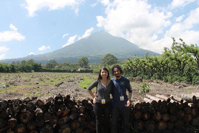 Coffee Tour & Local Villages Tour in Antigua Guatemala