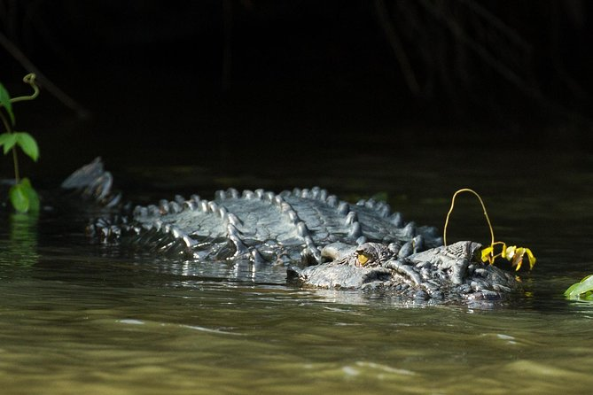 Crocodiles, Blue Whales and Turtles a truly wild coastal experience photo 1