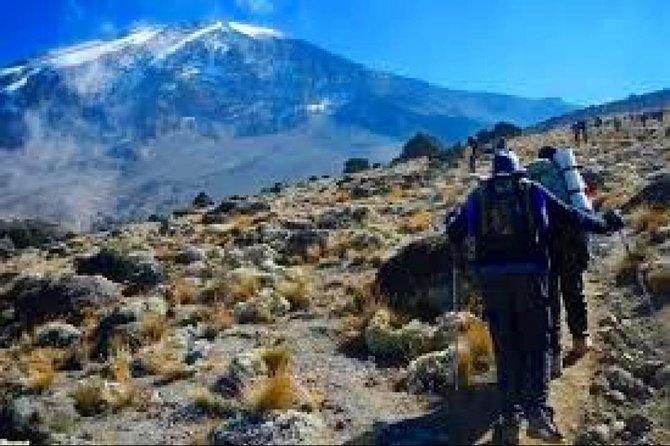 Mountain climbing - 6 Days Machame Route