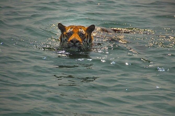 Sunderban Exotic Tiger Sanctuary tour from Kolkata