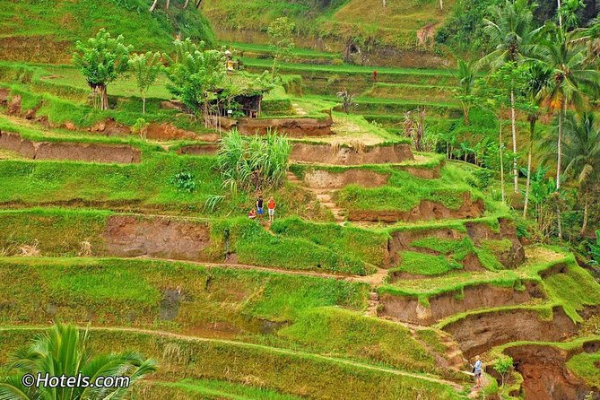 Best Tour To Ubud - The Main Thing and Trends in Ubud Tourism