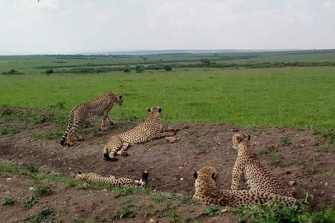 2 Days Masai Mara Joining Safari From Nairobi