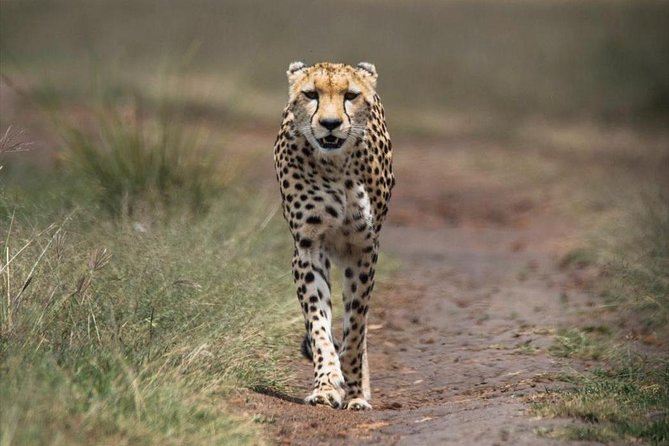 6 Days Amboseli, Lake Nakuru, Masai Mara Wildlife Safaris All Inclusive photo 7