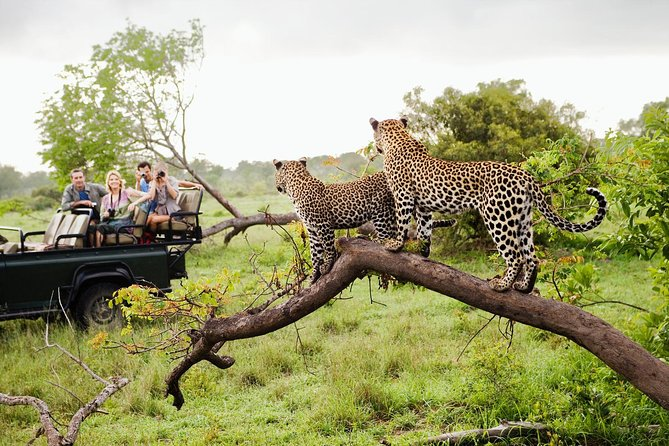 Skip the Line: Yala National Park Entrance Ticket
