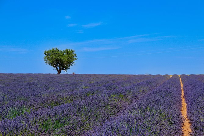 Provence - Lavender Fields Private Extended Full-Day Tour