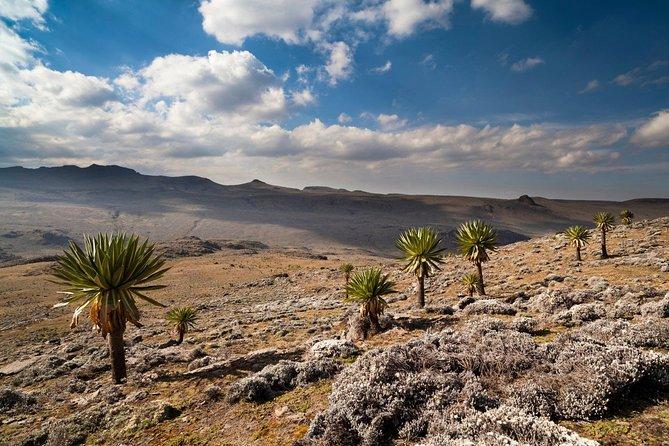 8 Days Trekking Bale Mountains