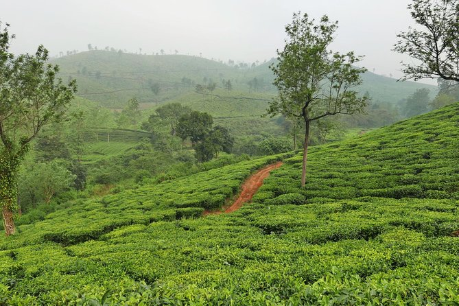 Walk Amidst Nature, Wayanad - A Guided Experience