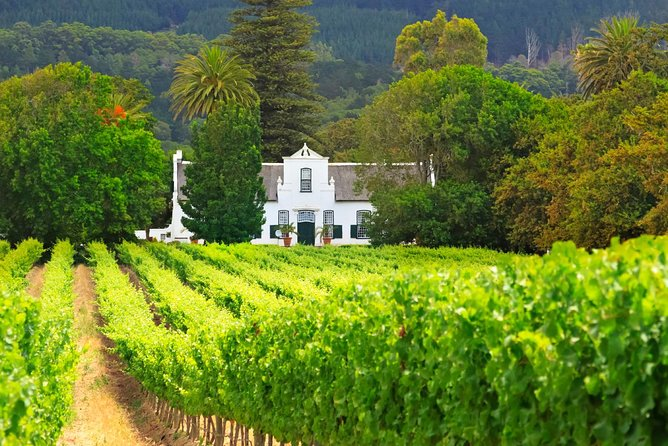 Half Day Private Cape Winelands Tour