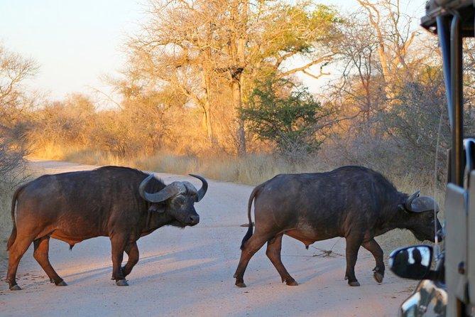 4 Day Kruger Park Budget Safari