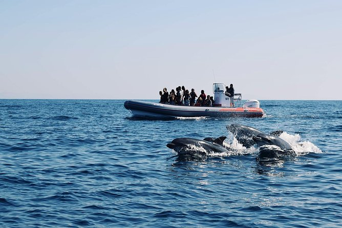 Dolphins and Benagil Caves from Albufeira - Allboat