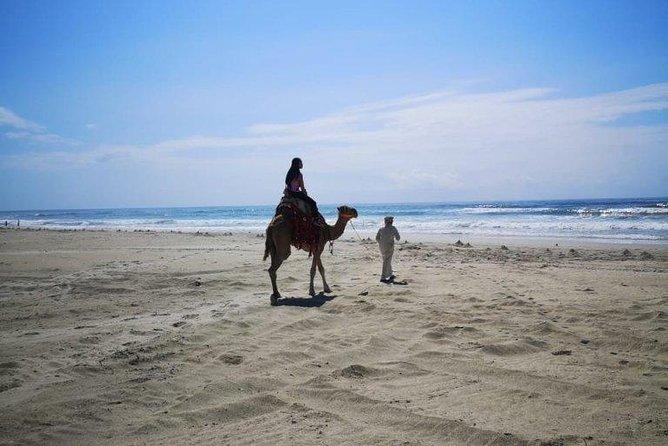 Paseo en camello en Salalah por la playa del mar de Arabia - Por Beautiful Salalah