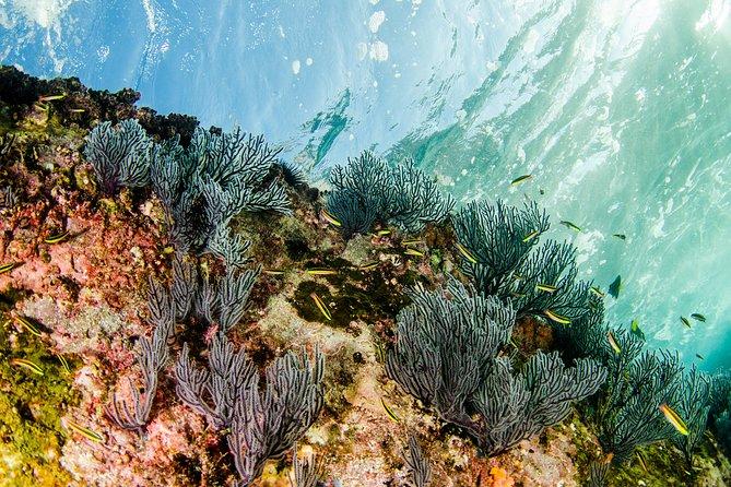 Cabo Pulmo Snorkel