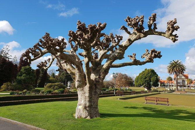 The Quest for the Lost Companion - A Rotorua Adventure