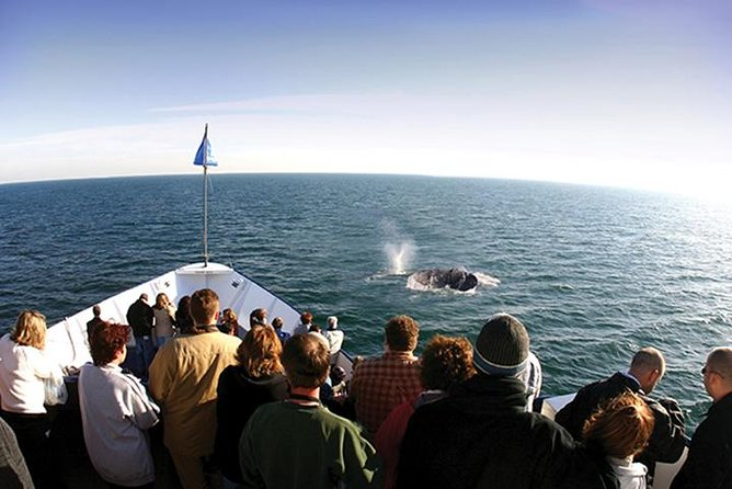 San Diego Winter Whale Watching Expedition Cruise photo 1