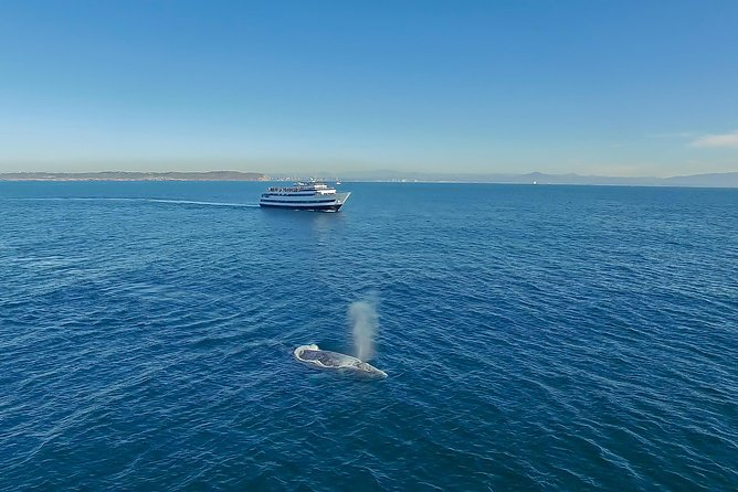 San Diego Winter Whale Watching Expedition Cruise photo 8