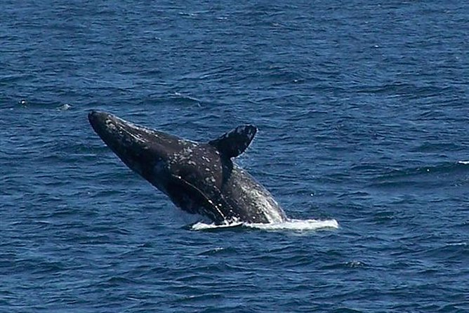 San Diego Winter Whale Watching Expedition Cruise photo 2