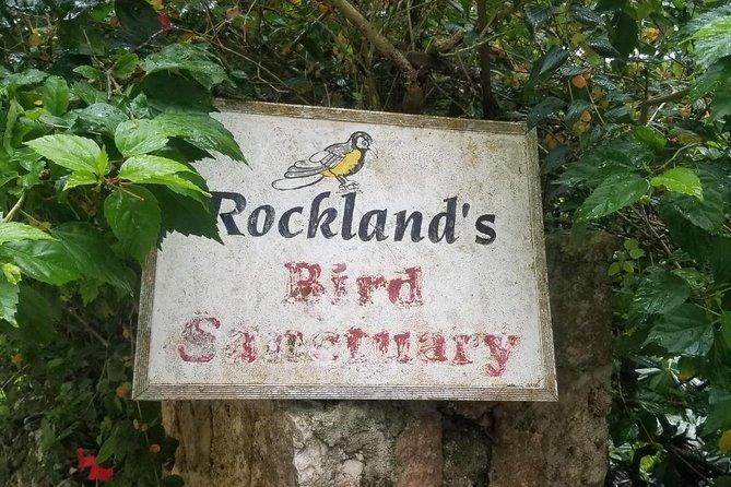 Rockland Bird Feeding And Montego Bay Highlight Tour