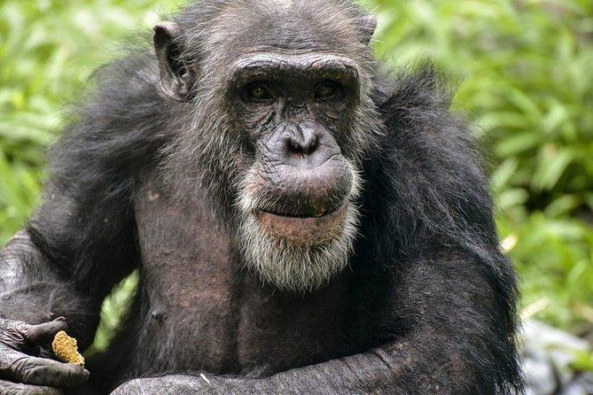 10 Days Gorilla, Chimpanzee and Murchison Falls Safari