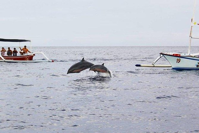 Dancing With Dolphins In Lovina Bali