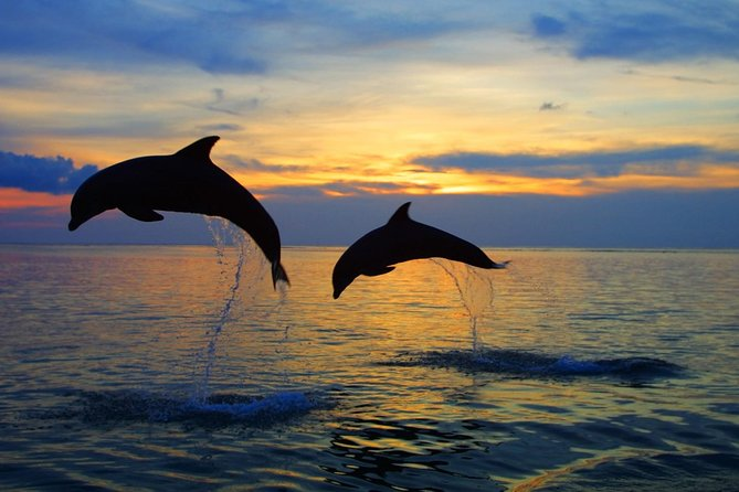 Dolphin North Bali Tour