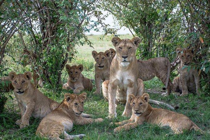 5 Days Masai Mara, Lake Naivasha, Lake Nakuru Safari