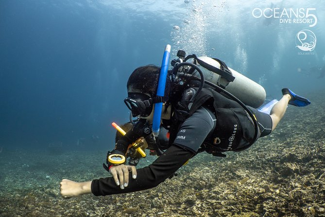 Fun Dive with a certified guide
