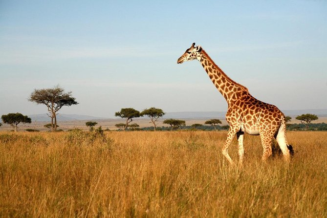 4 Day Tanzania Camping Safari photo 13