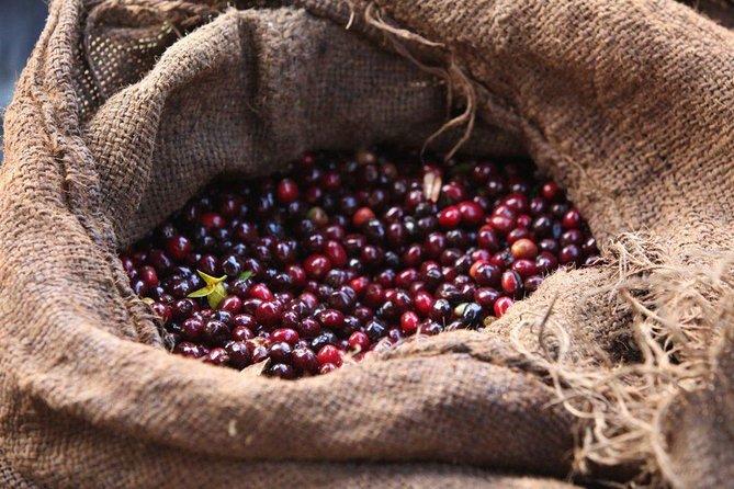 8 Days Ethiopian Coffee Tour