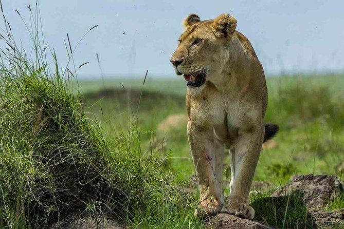 Executive Adventure Safari in Masai Mara Kenya