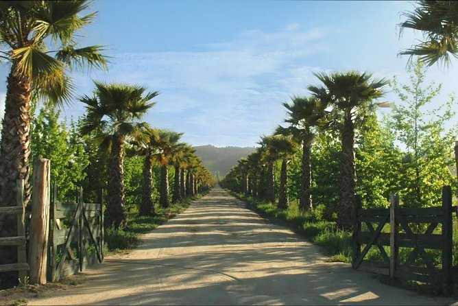 Boom! to the senses in Casablanca Valley, learn from Organic and Biodynamic