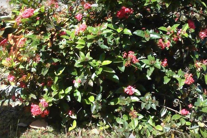 Round-trip St George Village Botanical Garden in St Croix