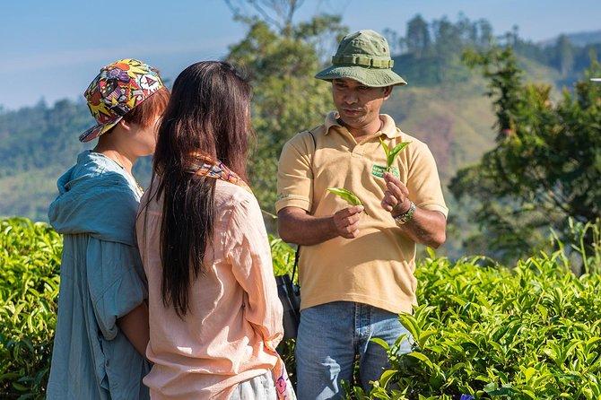 The Ceylon Tea Story – The Authentic Experience