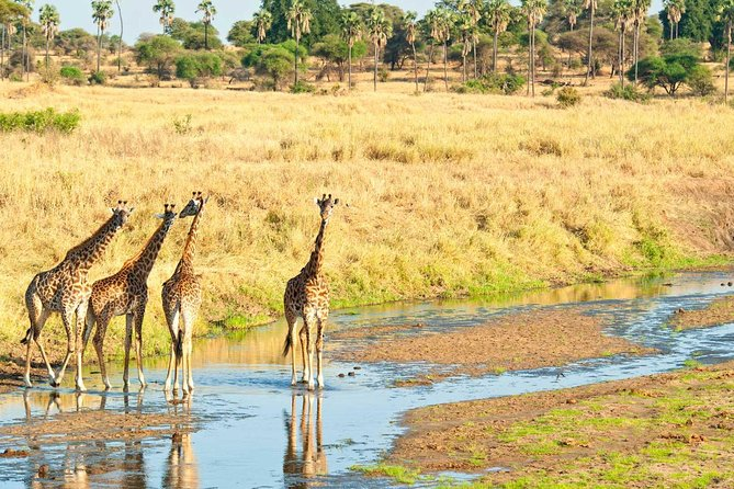 PRIVATE Day Trip to Tarangire National park