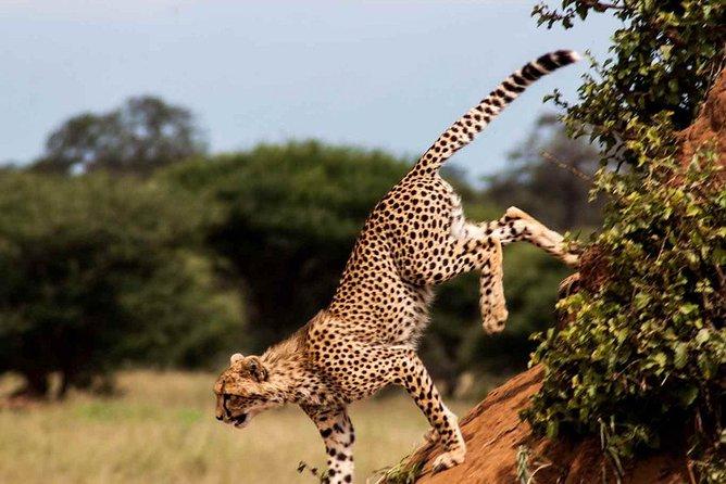 2 Days Private Trip To Tarangire And Ngorongoro