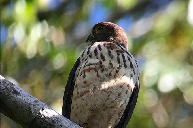 Carara National Park Birdwatching Group Guided Tour Experience.
