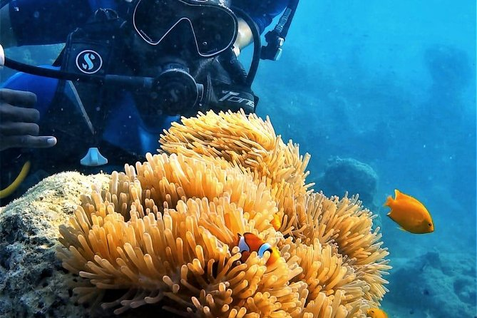 Scuba Diving For Beginners Or Non Swimmers