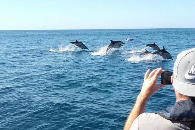 Dolphins Watching and Visit Caves photo 8