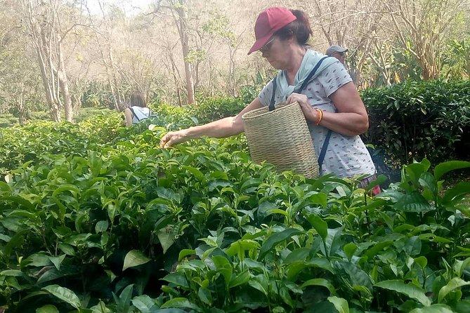 Chiang Mai Private Tour with Tea Plantation, Karen Village, Doi Suthep