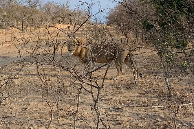 Specialized Tours,Transfers,Safaris and Transport